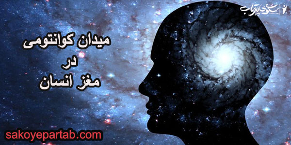 میدان کوانتومی در مغز انسان